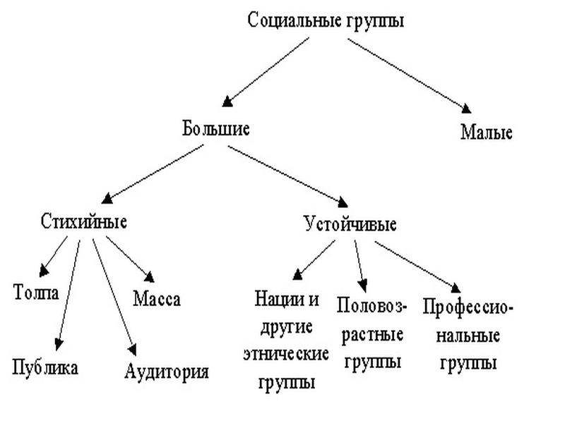 социальные группы виды