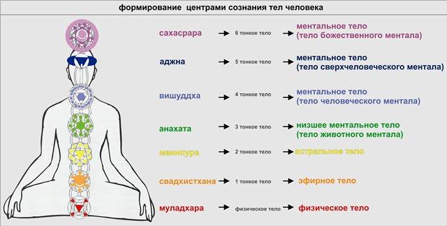 биоэнергетика человека? биоэнергетика человек insoz.ru